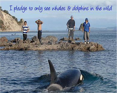 whaleanddolphindonate