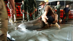 navy-dolphin-medical-attention_h